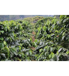 Nicaragua Finca El Limoncillo