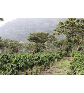 Guatemala Finca Pampojila