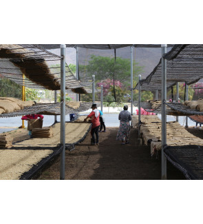Guatemala Finca Capetillo