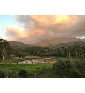 Honduras Cerro Bueno Organic